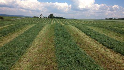 Grasstreng