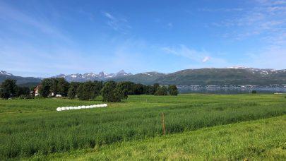 Holt i Tromso 12 august 2020 foto Ingvild L H