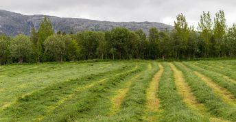 Slatt Sundoya Leirfjord Foto Ingvild Melkersen 8